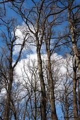 (Giada Cortellini) Tags: trees alberi forest wood inthewoods landscape nature natura