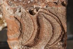 Segment of a nautilus (straight from) in crinoid breccia (Permian), Jackson Wash, southwest Utah (swissuki) Tags: geology ut utah motaqa motaqua jackson wash permina nautilus fossil