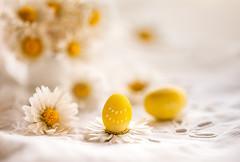 Yellow on white (Inka56) Tags: smileonsaturday yellowonwhite eggs daisies easter happyeaster tablecover highkey stilllife flowers eastereggs macro closeup