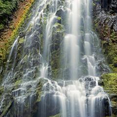 Proxy Cascade (Aaron Bieleck) Tags: hasselblad500cm 120film analog 6x6 square film filmisnotdead hasselblad mediumformat wlvf proxyfalls pnw pacificnorthwest waterfall cascade oregon outdoors hiking 150mmct moss kodakportra160