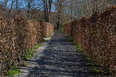 Between Botanical Walls (Rind Photo) Tags: walls brown spring path knivholt afmicronikkor55mmf28 rindphoto clauschristoffersen beautiful atmosphere