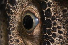 Œil de dinosaure - Old eye (Sp6mEn Pics) Tags: taxidermie animaux empaillés disparus vivants lille france hautsdefrance nord lynx araignée loup dinosaure oiseau squelettes mammifère marin momie insects