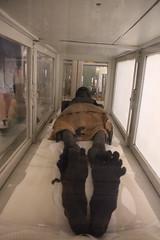 Momie (Sp6mEn Pics) Tags: taxidermie animaux empaillés disparus vivants lille france hautsdefrance nord lynx araignée loup dinosaure oiseau squelettes mammifère marin momie insects