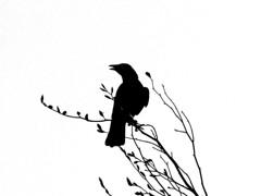 crow in tree (oneofmanybills) Tags: crow tree silhouette olympus branch bird wildlife nature