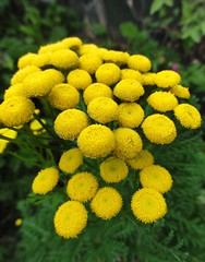 Flowers in the garden (sweetpeapolly2012) Tags: flowers flower flora garden gardenflower inthegarden