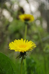 Near, far (Sundornvic) Tags: nature plants trees woods leaves flowers shropshire spring pentax art pentaxart