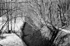 Woodland Ditch at the end of Winter (Helios 1984) Tags: topcon35l beselertopconl topconl beselerl topcor44cmf2 topcor44mmf2 doublegausslens doublegauss rangefindercamera topcon tokyokogaku トプコン35l トプコン レンジファインダーカメラ フィルム ヴィンテージカメラ seikoshamxl leafshutter セイコーシャmxl konicaminoltadimageiv dimageivscanner minoltascanner dimageiv bwhomeprocessing expiredfilm expired35mmfilm agfarondinax rondinax35u ilfordrapidfixer daylightloadingfilmdevelopingtank sp110ec kodakhc110 ilfordfilm ilforddelta100 35mmcamera filmcamera 135mmfilm blackandwhitefilm nature trees woodland ditch