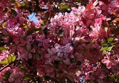 Tree Blossom (Wolfgang Bazer) Tags: tree blossom blossoms baumblüte blüten frohe ostern happy easter frühling spring springtime arsenal landstrase wien vienna österreich austria