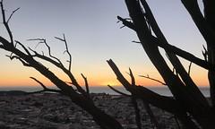 #16ThAvenue #TiledSteps #GoldenGateHeights #SanFrancisco (Σταύρος) Tags: onthehill sunset behindthebranches 16thavenue stair tiledsteps goldengateheights sanfrancisco kalifornien californië kalifornia καλιφόρνια カリフォルニア州 캘리포니아 주 cali californie california northerncalifornia カリフォルニア 加州 калифорния แคลิฟอร์เนีย norcal كاليفورنيا sf city sfist thecity санфранциско sãofrancisco saofrancisco サンフランシスコ 샌프란시스코 聖弗朗西斯科 سانفرانسيسكو