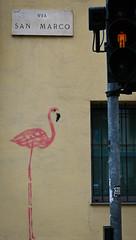 Flamingos of Milan (photos by ali) Tags: milan milano italy italia flamingo nikon z6 nikonz6