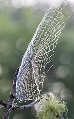 Spider Web (Merrillie) Tags: web bokeh nature australia insects rural morning spider drops closeup paterns southmaroota dew outdoors macro water waterdrops spiderweb