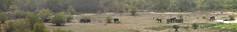 Savanna elephants, Mole National Parks, Ghana (inyathi) Tags: africa westafrica ghana africanwildlife africananimals savannaelephants loxodontaafricana panoramas panoramics molenationalpark molemotel