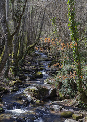 Camino del agua (ponzoñosa) Tags: sierra francia salamanca peña mogarraz camino agua landart arte milanos
