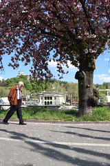 Passi di primavera - Spring steps. (sinetempore) Tags: torino turin corsocairoli ombre shadows fiorirosa pinkflowers primavera spring pinktree passidiprimavera springstep uomo man street passeggiata walk
