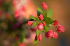 dream garden (eva.pave) Tags: nature garden park tree flower bloom blossom pink spring light dof bokeh detail fantasy