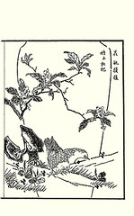Loquat, Asian plantain and rock dove (Japanese Flower and Bird Art) Tags: flower loquat eriobotrya japonica rosaceae asian plantain plantago asiatica plantaginaceae bird rock dove columba livia columbidae tokutaro naoe ukiyo woodblock picture book japan japanese art readercollection
