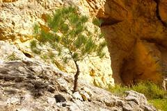 Arrelat a la roca ...........ED (DAVID.gv65) Tags: selección david65 color chrome alcoi piedra natural montaña arboles natur barrancdelsinc dgvalor photodgv