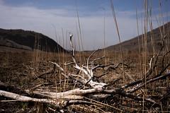 20190416a73_7310 (Gansan00) Tags: ilce7m3 α7ⅲ sony japan 大分 oita 日本 九重連峰 登山 landscape snaps ブラリ旅 04月 fe24105f4 trekking travelphotography