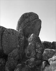 rocher - tête - Steinberg (JJ_REY) Tags: rocksteinberghead montagne vosges steinberg moutains bw film largeformat 4x5 fuji acros100 toyofield rodenstock aposironarn 150mmf56 rochertêtesteinberg alsace france