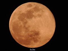 The Pink Moon (Sam Petar) Tags: iraq baghdad nikon p510 moon sky night nature natural pink