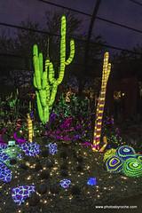 Electric Desert (doveoggi) Tags: 7362 arizona desert phoenix desertbotanicalgarden