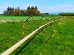 Irrigation pipe at the Wooden Shoe Tulip Farm (Rick Obst) Tags: irrigationpipe woodenshoetulipfarm