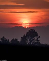 Sunset (Donard850) Tags: bangor countydown northernireland clouds sunset trees