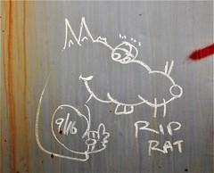 RIP RAT 9/16 (rabidscottsman) Tags: scotthendersonphotography rat rip riprat train rr railroad railroadgraffiti railroadmoniker moniker mn minnesota northfieldminnesota socialmedia usa unitedstatesofamerica ricecountyminnesota nikon nikon7100 d7100 tamron tamron18270 18270 paintedsteel rollingart rust rusty saturday weekend holysaturday flickr