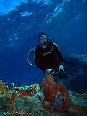 usvi 19 P3202159a sm (Pauline Walsh Jacobson) Tags: tropical marine sea life water atlantic ocean scuba diving dive seacreature coral reef underwater animal usvirginislands virginislands stthomas stjohn usvi vi caribbean pauline walsh jacobson