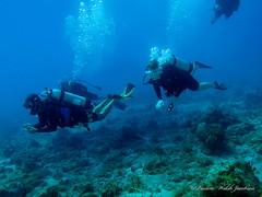 usvi 19 P3202114a sm (Pauline Walsh Jacobson) Tags: tropical marine sea life water atlantic ocean scuba diving dive seacreature coral reef underwater animal usvirginislands virginislands stthomas stjohn usvi vi caribbean pauline walsh jacobson