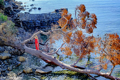 The fallen tree... what else? (Gian Floridia) Tags: rapallo albero caduto fallentree ragazza rosso streetphotography whatelse