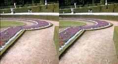 Batch E 0029 (dizzygum) Tags: vintage stereo 3d slide images 1960 european trip us to europe flowers palace versailles