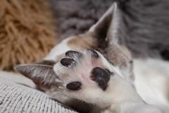 Magui010 (Matias Lynch) Tags: cat cats animal wild wildlife feline domestic buenosaires argentina