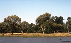 Botswana safari set