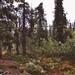 Tombstone Park - 003.