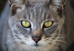 stray cat (Christine_S.) Tags: neko chat japan portrait canon eos m5 mirrorless ef100mm coth5