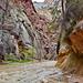 High water at Zion Narrows