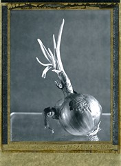 dans la cuisine - oignons (JJ_REY) Tags: oignons onions mountains instantphoto peelapart polaroid pn55 positive 4x5 largeformat toyofield45a rodenstock aposironarn150mmf56 colmar alsace france