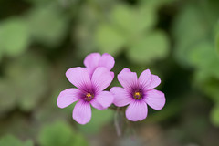 _1011193.jpg (plasticskin2001) Tags: flower micronikkor f28s ai 55mm