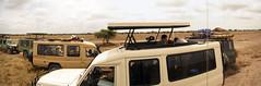 Cheetah watching, Ndutu, Ngorongoro Conservation Area, Tanzania (inyathi) Tags: africa eastafrica tanzania africananimals africanwildlife cheetahs acinonyxjubatus bigcats cats tourism cars safari ndutu ngorongoroconservationarea nca serengeti