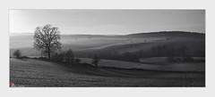 Dans le petit matin (dany.schoulz) Tags: noiretblanc mulhausen givre aube leverdesoleil paysage campagne