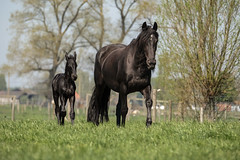 Mum & son in the sun B (Drummerdelight) Tags: captiveanimals horses lowpov