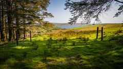 Colliford Lake (David Lea Kenney) Tags: landscape moorland travel explore lake country countryside rural tree trees field fields farming cornwall coliford