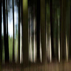Waldesleuchten (zeh.hah.es.) Tags: schweiz switzerland wald forest gisikon gisikonroot icm intentionalcameramovement motionblur baum tree bäume trees grün green schatten shadow schwarz black blau blue licht light