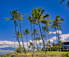 Nice Backyard (Kirt Edblom) Tags: maui mauihawaii kihei kiheihawaii hawaii wife waves waterscape milf palm palmtree palmtrees tree trees tropical gaylene green grass yard blue bluesky garden pacific pacificocean ocean kirt kirtedblom edblom luminar nikon nikond7100 nikkor18140mmf3556 landscape