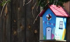blue tit box1 (marlesghillie) Tags: bluetit nestbox rspb gardenbirds nature spring