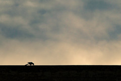 Industrial silence (jimiliop) Tags: bird alone lonely contrast sky industrial building wall shadows clouds eating minimalism