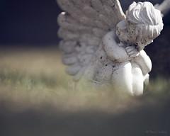 Angel (gissberg) Tags: fe85mmf18 sonya7iii ilce7m3 angel bokeh hillekyrka gävleborg hille sweden