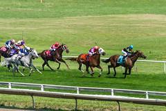Race 4 - the homestretch (avatarsound) Tags: boston suffolkdowns horse horseracing horses jockey jockeys race racetrack racing rider riding sport