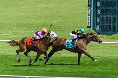 9 - The Curt Fox (GB) (Pedroza, Brian); 7 - Bret's At Caddies (Barbaran, Erik) (avatarsound) Tags: boston suffolkdowns horse horseracing horses jockey jockeys race racetrack racing rider riding sport